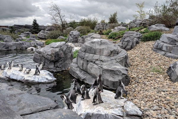 Wildlands Emmen Pinguins