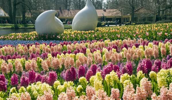 Openingstijden u0026 Prijzen van Keukenhof in Lisse - Fijnuit.nl