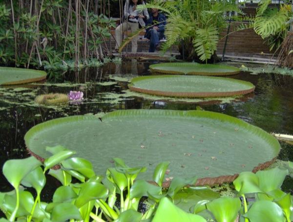 Botanische Tuin Leiden : Hortus botanicus leiden leiden informatie fotos reviews en