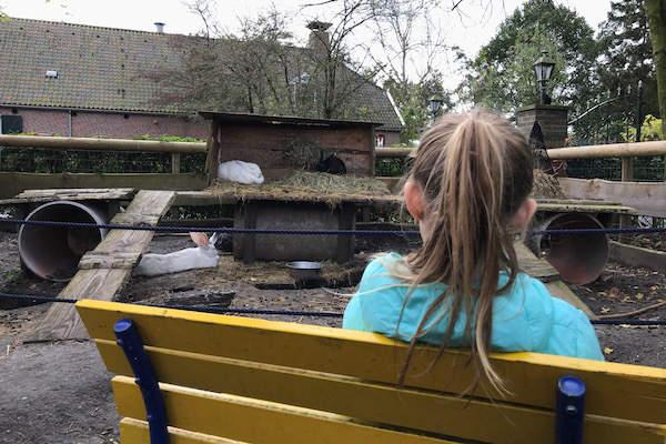 kinderboerderij merenwijk (leiden) informatie, foto's, reviews en