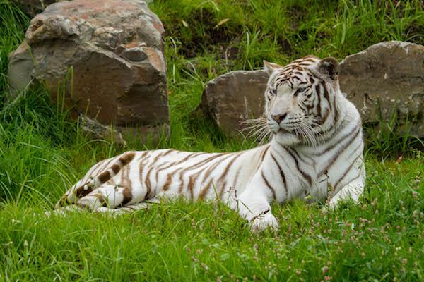 Kortingsbonnen Overloon Zoo